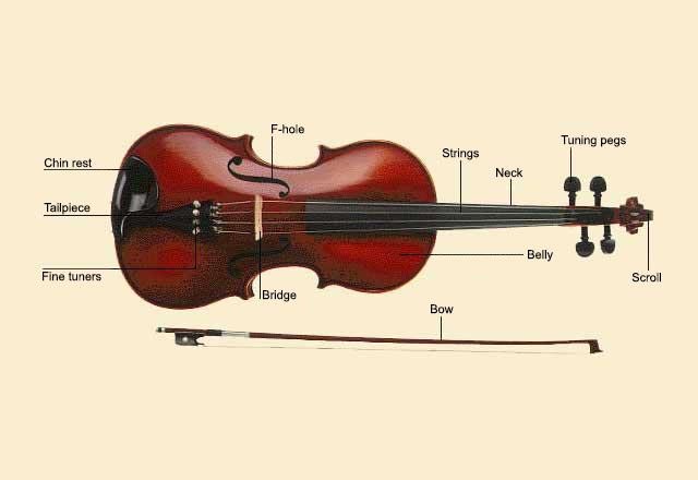 picture of Viola